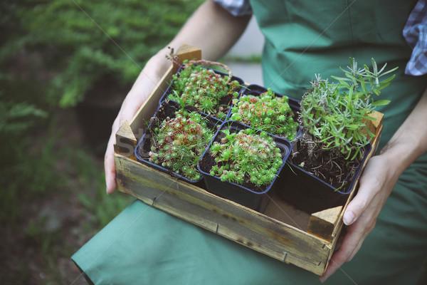 Femme boîte plantes mains jardin Photo stock © dashapetrenko