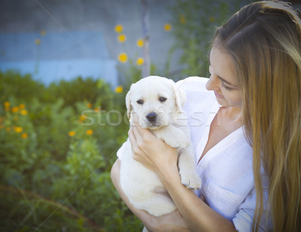 Close up of woman in white blouse with puppy of labrador  Stock photo © dashapetrenko