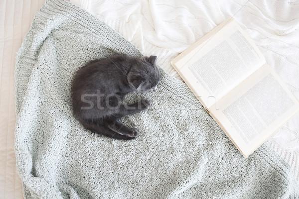 Gris britannique chaton couverture haut Photo stock © dashapetrenko