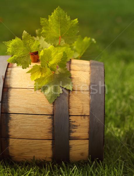 Foglie verdi uva vino barile alimentare Foto d'archivio © dashapetrenko
