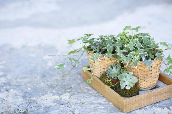 дома растений зеленый окна металл Сток-фото © dashapetrenko
