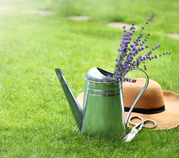 Lavender in watering can, hat and scissors Stock photo © dashapetrenko