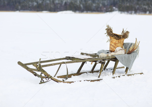 Vieux chien neige hiver course blanche Photo stock © dashapetrenko