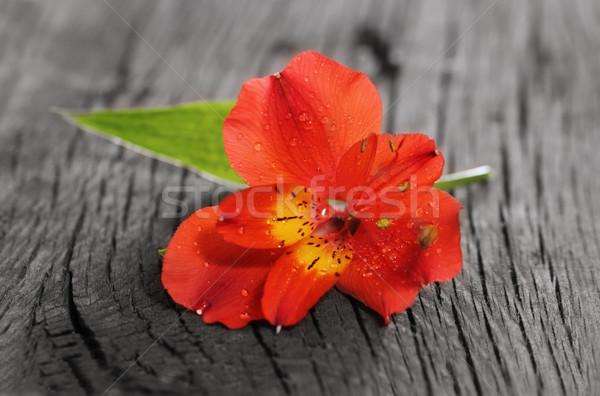Rouge orchidée fleur bois fond beauté Photo stock © dashapetrenko