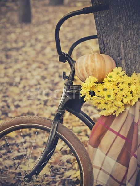 Vintage Bicycle Stock photo © dashapetrenko