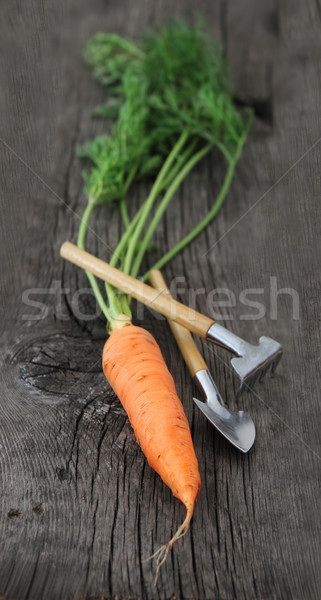 Carrot with garden tools Stock photo © dashapetrenko
