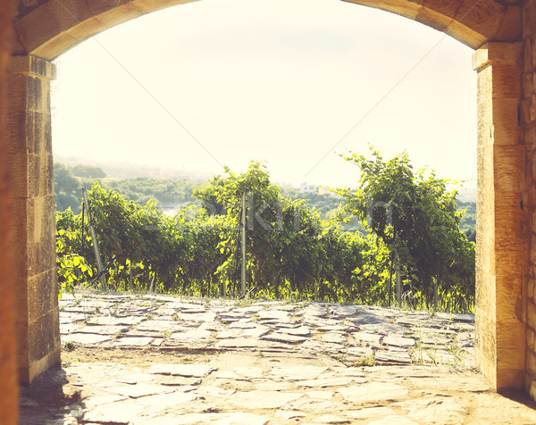 Vue vignoble collines vieux pierre porche Photo stock © dashapetrenko