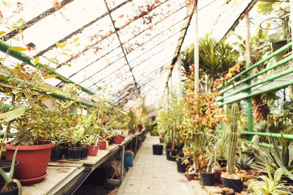 Vicolo bella alberi impianti giardino serra Foto d'archivio © dashapetrenko