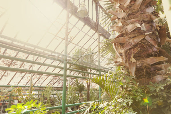 Alley with beautiful trees and plants in garden greenhouse  Stock photo © dashapetrenko
