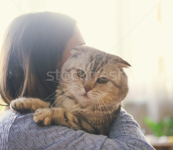 Foto stock: Gato · mantener · manos · mano