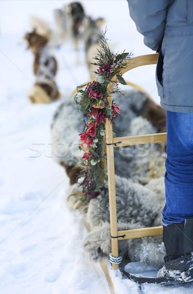 Husky собаки полярный круга собака Сток-фото © dashapetrenko