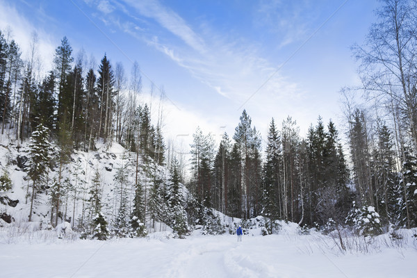 Winter landscape with snow and fir tree Stock photo © dashapetrenko