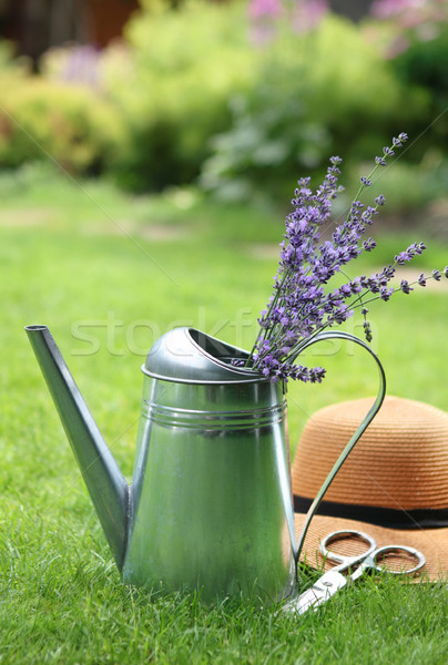 Lavender in watering can in the summer garden Stock photo © dashapetrenko