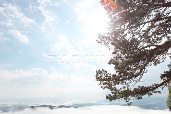 Yaprak dökmeyen ağaçlar güzel dağlar bulutlar Stok fotoğraf © dashapetrenko