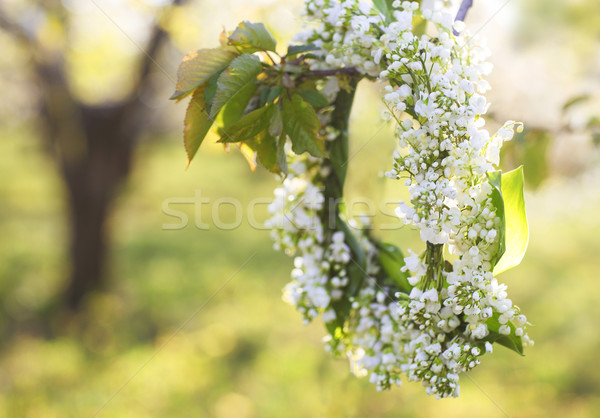 Spring wreath from lily of the valley  Stock photo © dashapetrenko