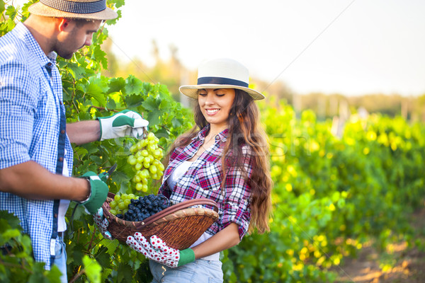 Portrait of a young happy couple in vineyard  Stock photo © dashapetrenko