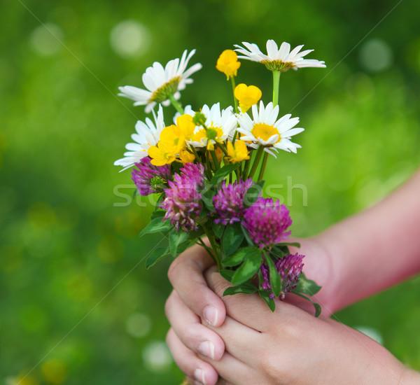 Százszorszépek kezek gyermek napos tavasz közelkép Stock fotó © dashapetrenko