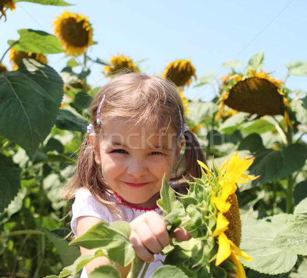 Cute dziecko słonecznika lata dziedzinie mały Zdjęcia stock © dashapetrenko