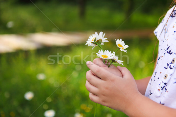 Daisies in hands of a child. Sunny spring background. Close up. Stock photo © dashapetrenko