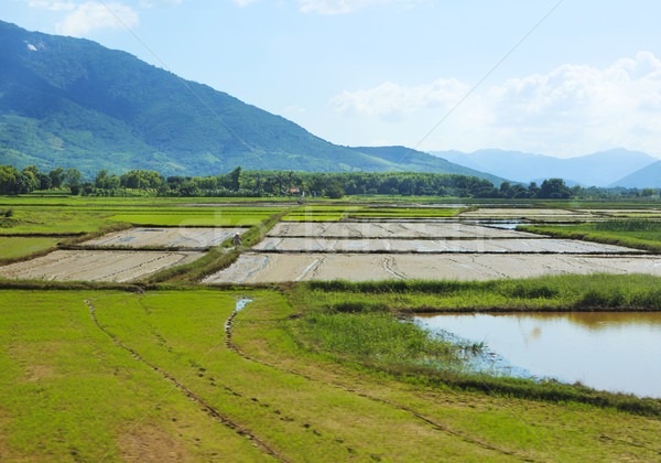 Rijstveld groen gras blauwe hemel berg bewolkt Stockfoto © dashapetrenko