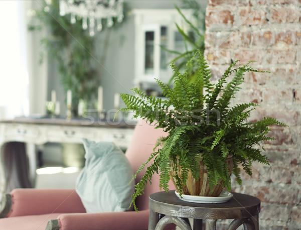 Stock photo: Green plant in contemporary interior