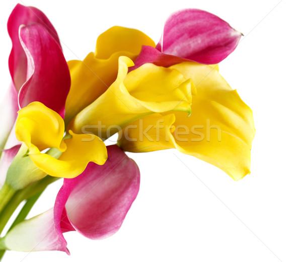 Jaune rose isolé blanche Photo stock © dashapetrenko