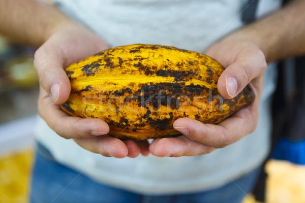 Peul hand ruw vers cacao plantage Stockfoto © dashapetrenko