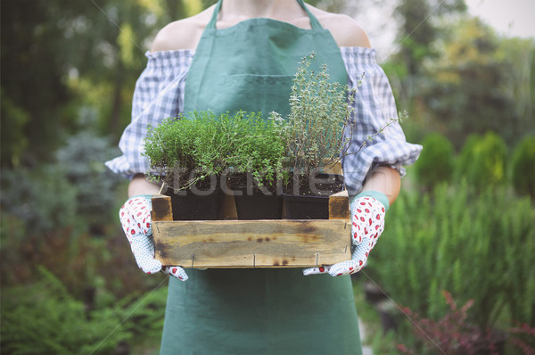 Woman holding a box with plants in her hands in garden center Stock photo © dashapetrenko