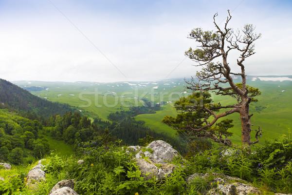 Mountain landscape. Valley view. Stock photo © dashapetrenko