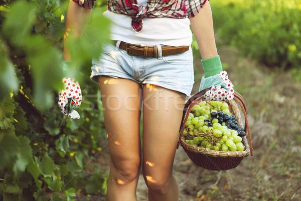 Glimlachende vrouw mand druiven wijngaard oogst vruchten Stockfoto © dashapetrenko