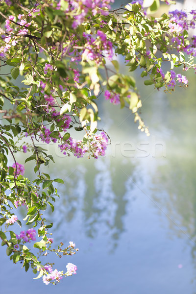 Blooming tree in the nature during spring by the lake Stock photo © dashapetrenko