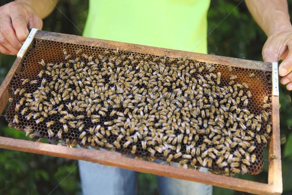 Petek odak arılar soyut doğa Stok fotoğraf © dashapetrenko