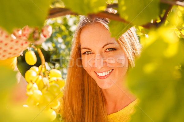 Woman winegrower picking grapes at harvest time Stock photo © dashapetrenko