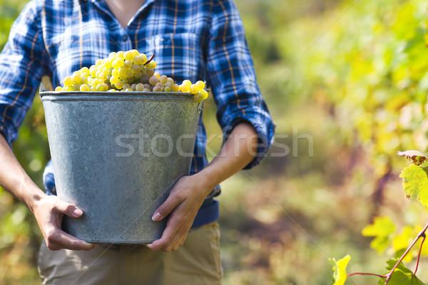 Uvas colheita jeans jovem mulher Foto stock © dashapetrenko