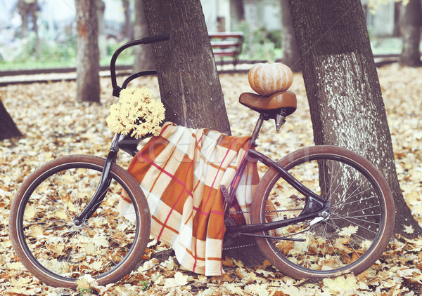 Vintage bicycle decorated with pumpking and flowers  Stock photo © dashapetrenko