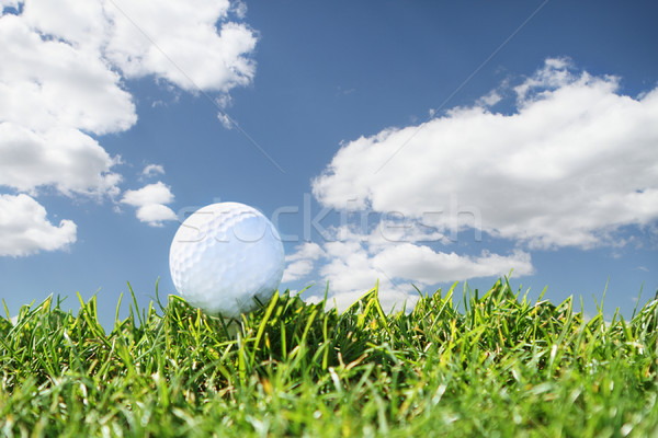 Close up golf course Stock photo © dashapetrenko