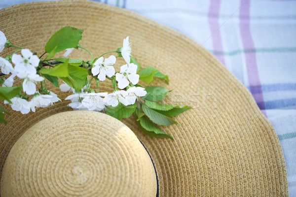 Close up of a hat with cherry blossom tree Stock photo © dashapetrenko