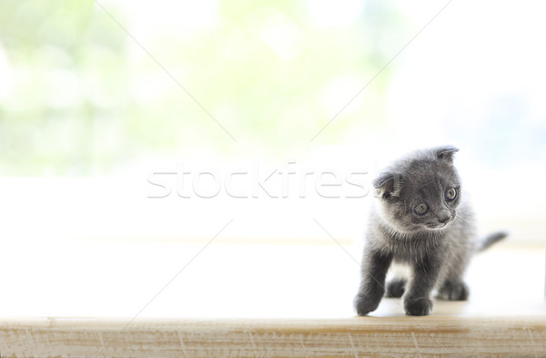 Little grey cat on wooden background Stock photo © dashapetrenko