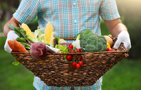 Stock photo: Basket filled fresh vegetables in hands of a man