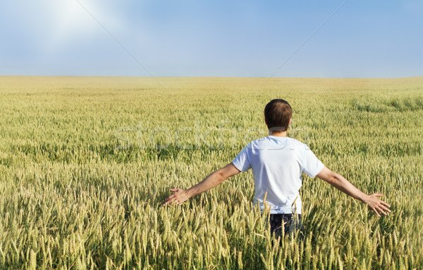 Man in wheat field Stock photo © dashapetrenko