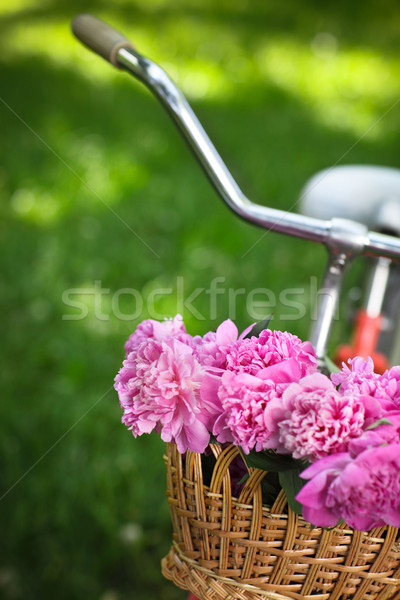 Stock photo: Vintage bicycle with basket with peony flowers