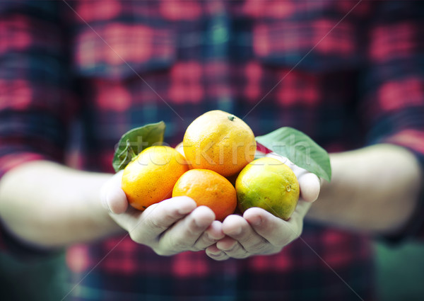 Tangerine in the hands of a man in a plaid shirt Stock photo © dashapetrenko