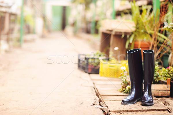 Beco belo árvores plantas jardim estufa Foto stock © dashapetrenko