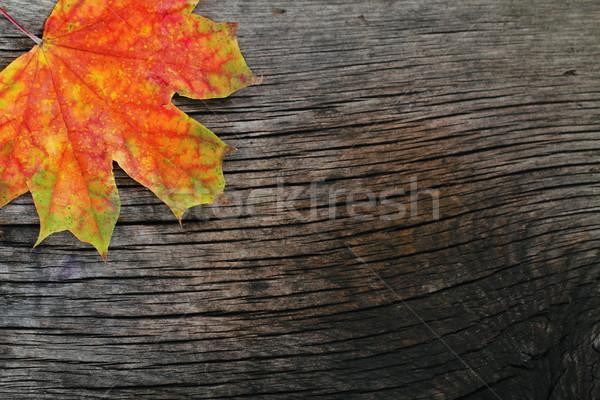 Automne bois érable laisse texture bois Photo stock © dashapetrenko