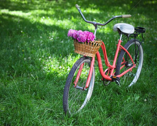 Vintage bicycle with basket with peony flowers  Stock photo © dashapetrenko
