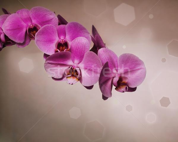 Rózsaszín orchidea barna retró stílus bokeh virág Stock fotó © dashapetrenko