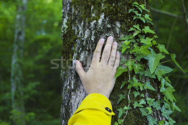 Man touching old tree. Wild nature protection concept Stock photo © dashapetrenko