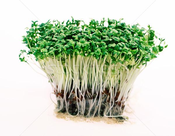 Close up of fresh green cress  Stock photo © dashapetrenko