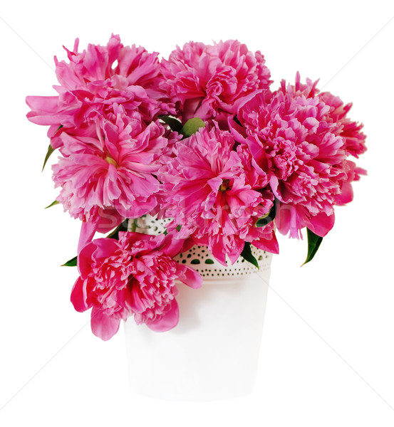 Pink peony flowers in white vase Stock photo © dashapetrenko