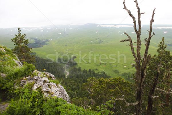 Valle scenario mozzafiato caucaso Russia fiore Foto d'archivio © dashapetrenko